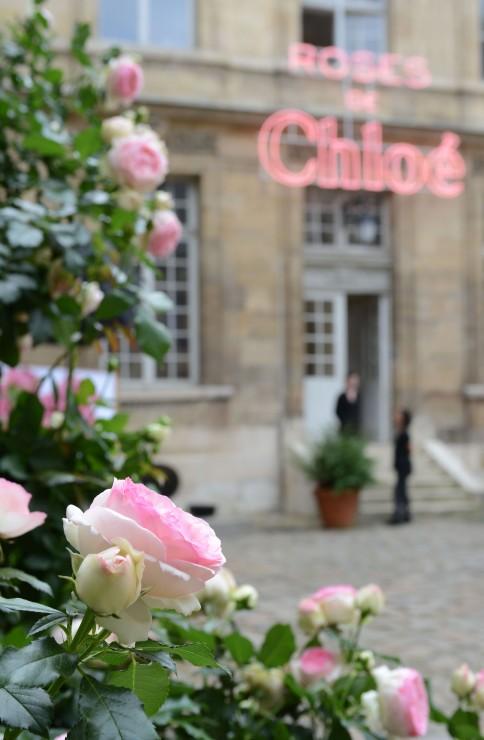 Roses-de-Chloé-5-484x740