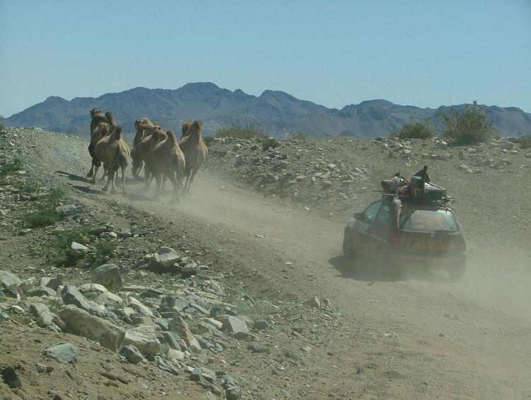 Mr-09-shane-camels